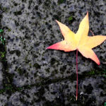 UU Aurigae: stella oro rosso