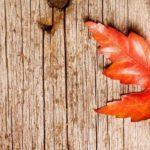 Una stella arancione d'autunno