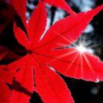 RV Cygni: un po' di rosso nel cielo
