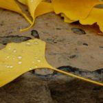 6 Trianguli: salutando Albireo
