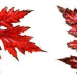 La stella più rossa del cielo boreale