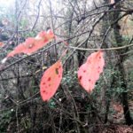 Stelle di colore rosa nella costellazione della Lepre